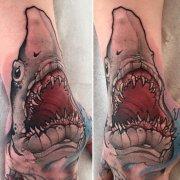 shark_0